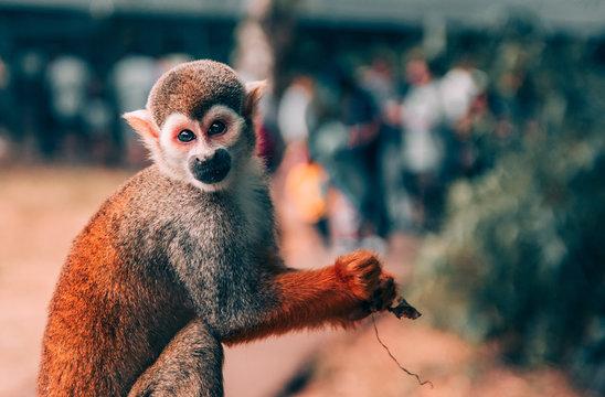 primate beside bush