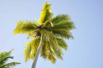 low-angle photo of coconut tree