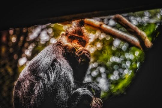 brown and gray monkey screengrab