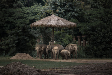 low light photography of five elephants under gray hut