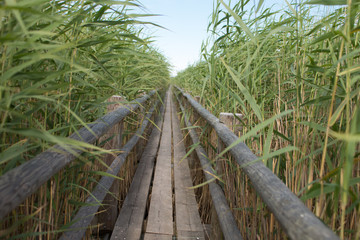 photo of wooden pathway between tall grasses