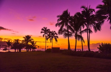 silhouette of palm trees near body of water