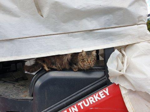 brown cat on peeking on tractor