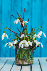 Snowdrops in a glass on a garden table