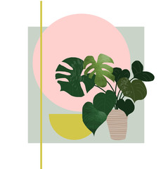 plant illustration. potted house plant vector. botanical art print. philodendron on geometric background.