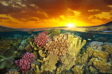 Sky with sunset light and a colorful coral reef underwater, split view half over and under water, Pacific Ocean, French Polynesia