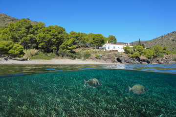 Spain peaceful Mediterranean coast with fish and sea grass underwater, Roses, Costa Brava, Catalonia, split view half over and under water