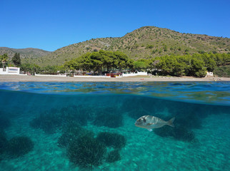 Spain Costa Brava, Cala Montjoi beach shore with a fish and seagrass underwater, Mediterranean sea, Roses, Catalonia, split view half over and under water