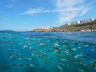 Spain coastline with buildings near L'Escala town and a school of fish underwater, Mediterranean sea, Costa Brava, Catalonia, split view half over and under water