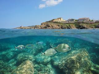 Spain rocky coastline with houses and sea bream fish underwater, Mediterranean, El Port de la Selva, Costa Brava, Catalonia, split view half over and under water
