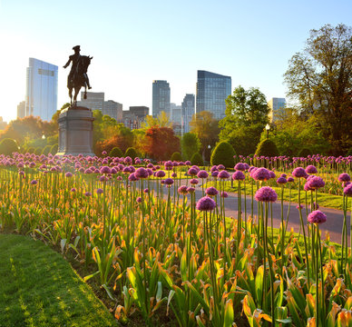 Boston Public Garden at Sunrise. Purple Allium Flowers, Washington Statue and City Skyline in Background