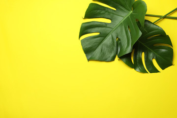 Fototapeten Gelb Flat lay composition with tropical monstera leaves and space for text on color background