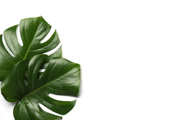 Flat lay composition with tropical monstera leaves and space for text on white background