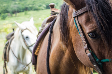 Horses sealed for ride in the field.