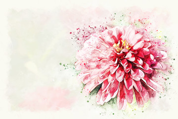 Abstract colorful flower blooming watercolor illustration painting background.