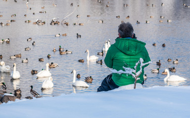 An enthusiastic photographer is taking pictures of swans