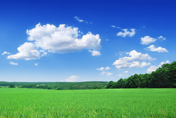 Spring landscape, view of green field and the blue sky