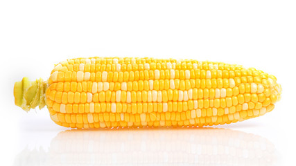 Wall Mural - Bicolor Sweet Corn on white background