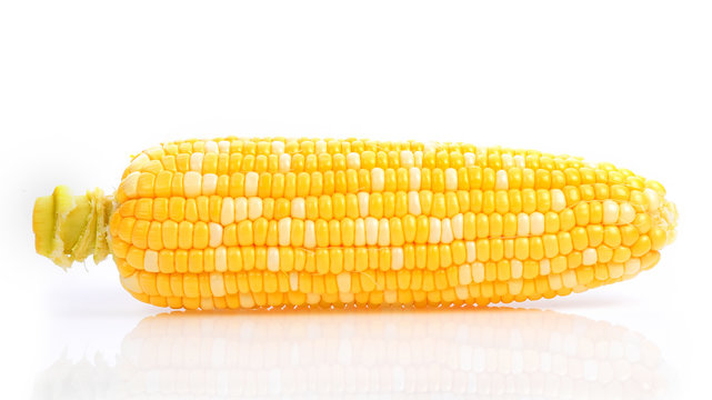 Bicolor Sweet Corn on white background