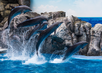 dolphins jumping in water