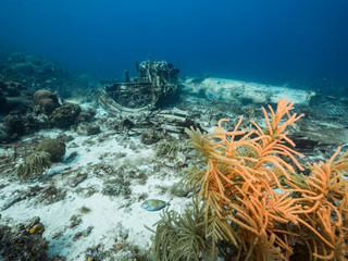 Airplane wreck as a part of the coral reef in the Caribbean Sea around Curacao