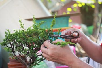 Making of bonsai trees. Bonsai pruning, Handmade accessories wire and scissor bonsai, bonsai tools.