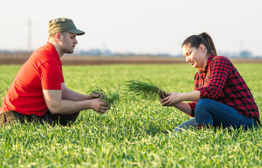 Young farmers examing planted wheat fields