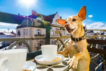 Self adhesive Wall Murals Crazy dog dog having a coffee break