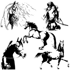 Horse silhouette collection. Vector illustration