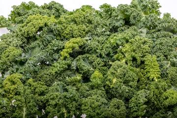 A healthy fresh curly kale
