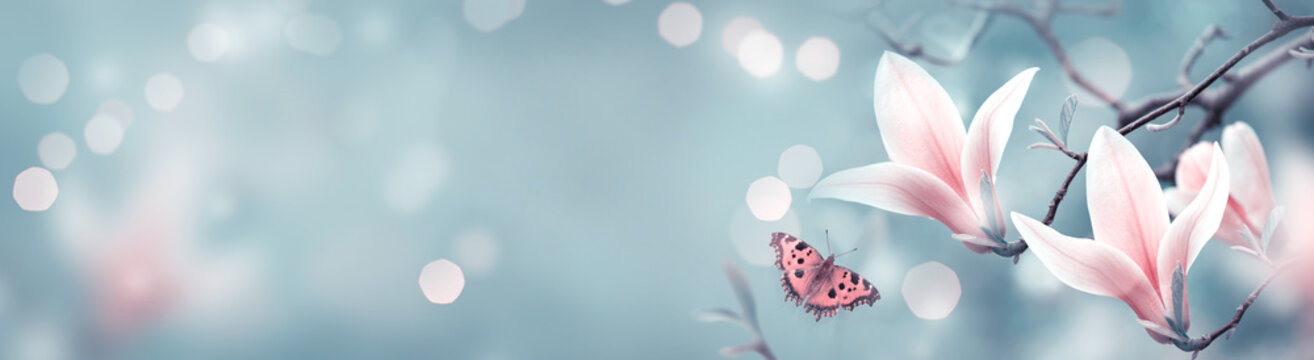 Mysterious spring background with pink magnolia flowers and flying butterfly. Magnificent floral banner.