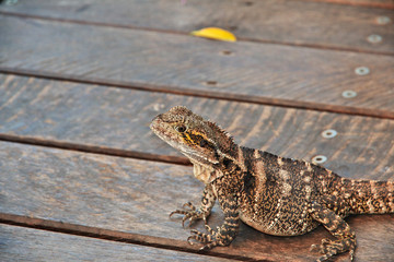 Kuranda, Cairns, Australia