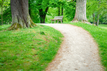 lonely bench in the green