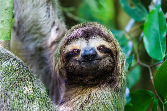 sloth, Manuel Antonio National Park, Costa Rica, Central America