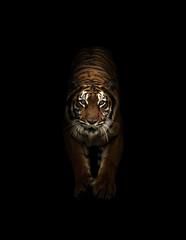 Deurstickers Panter bengal tiger in the dark