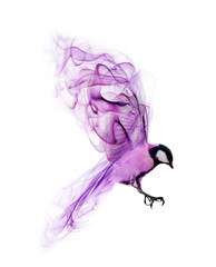 flying abstract lilac bird from smoke isolated on white