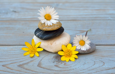 Acrylic Prints Daisies Three cairn natural Zen stones piled up on a old gray wooden background with field flowers flower and empty copy space