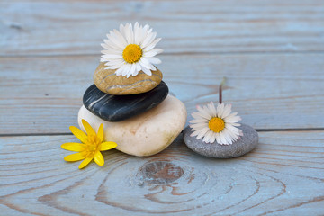 Printed roller blinds Daisies Three cairn natural Zen stones piled up on a old gray wooden background with field flowers flower and empty copy space