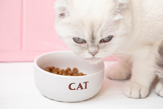 White cat eating dry food on pink background