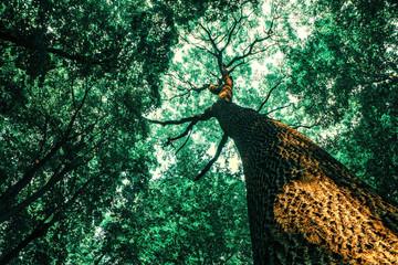 Fotobehang Bossen a spring forest trees. nature wood sunlight backgrounds.