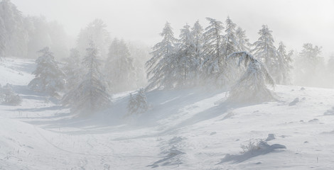 Gleize Pass (Col de Gleize), Champsaur, Hautes-Alpes, Alps, France: Wind blowing snow on the slopes and trees of Col de Gleize after a snowfall