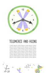 Telomeres and aging. Chromosome and DNA. Wall clock. Vector