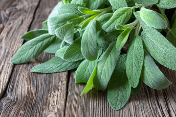 Fresh sage leaves on a rustic background