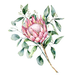 Watercolor protea bouquet with eucalyptus leaves. Hand painted pink flower with branch isolated on white background. Nature botanical illustration for design, print. Realistic delicate plant.