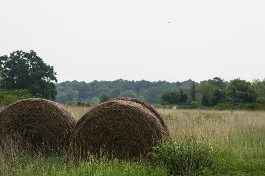 Hay bales beside a field