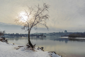 Lonely tree on the river bank in the reflection of the sun and clouds