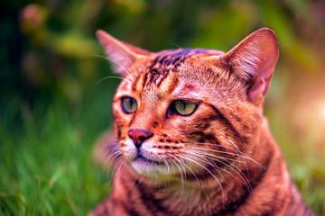 Close-up Portrait of Curious Face .