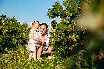 Mother and little daughter picking raspberries together in summer
