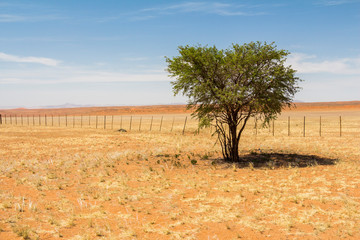 Tree in the wide desert of Namibia
