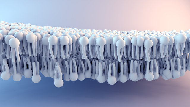 Cell Membrane structure in motion